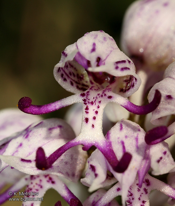 Looking After Orchids  How to care for orchids at home